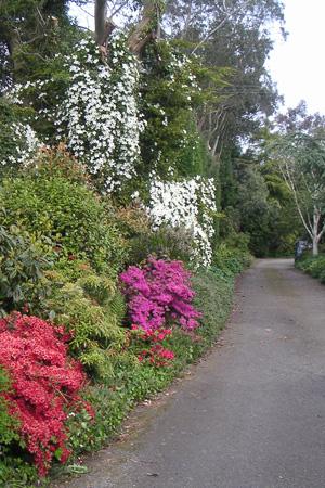 NGS gardens | Highcroft Gardens